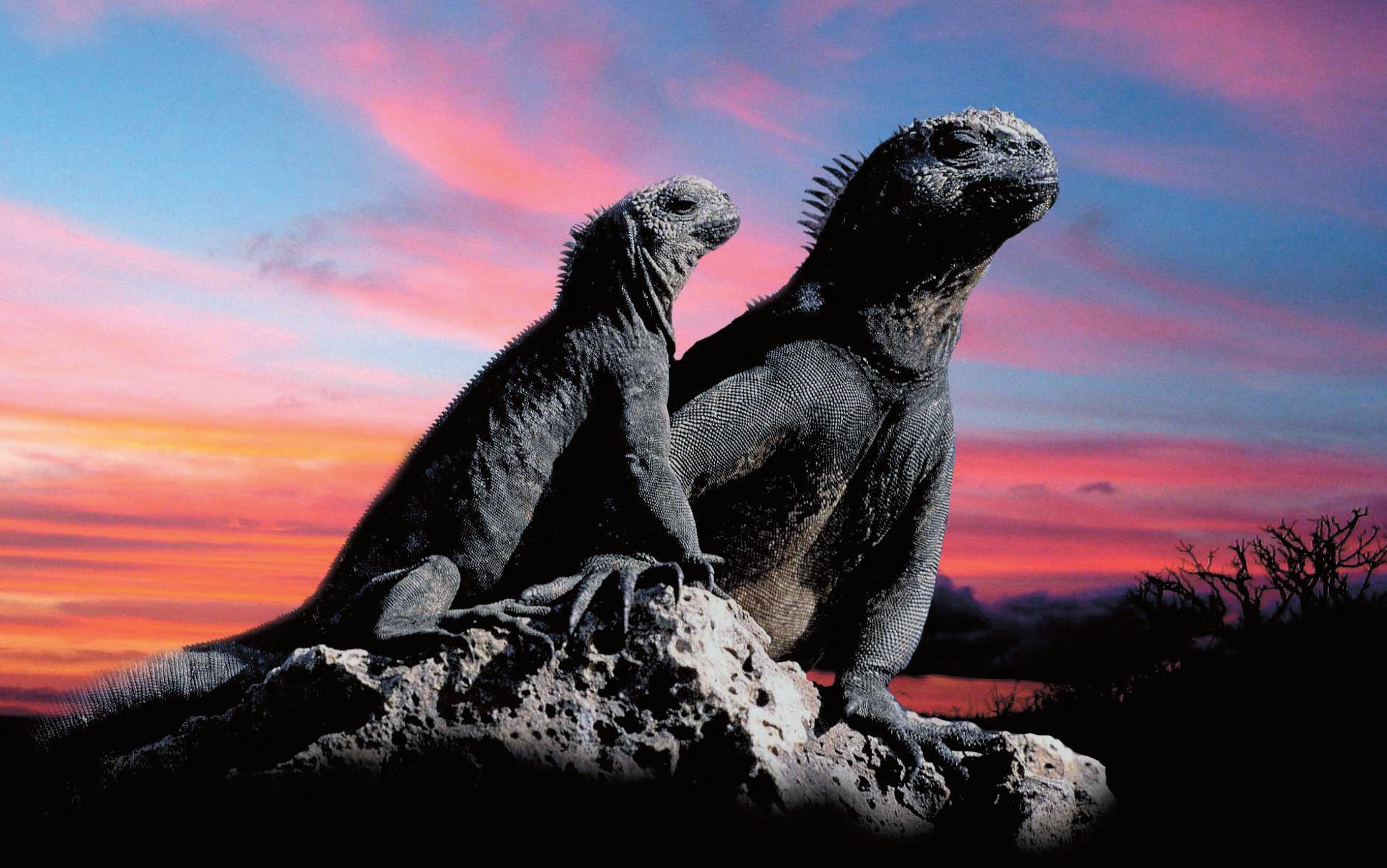 Po Galapágách se stále ještě prohánějí ještěři z pravěku.