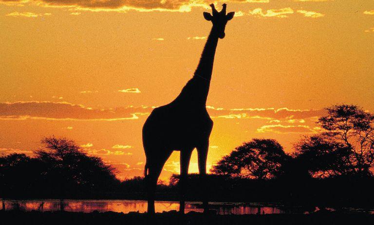 Západ slunce nad africkým kontinentem je zážitek, který se vryje do paměti.