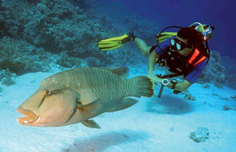 Potápění v Rudém moři je dostupné jak vzdáleností, tak cenou.
