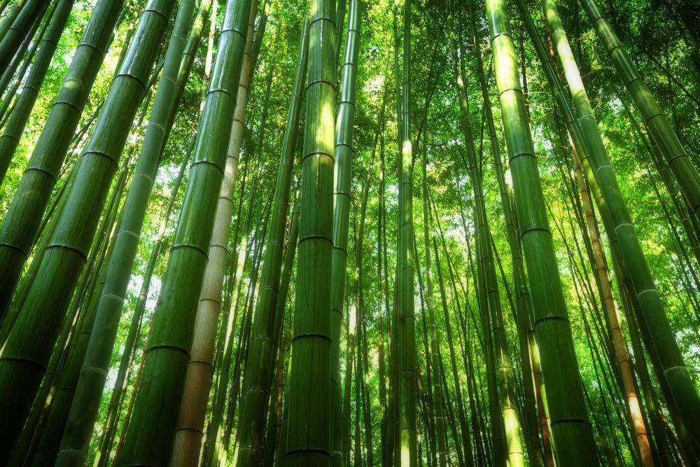 Z bambusu se vyrábějí rohožky, klobouky a dokonce kdysi dávno i zbraně.