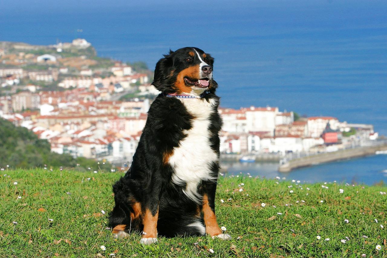 Baskicko mají rádi nejen lidé.