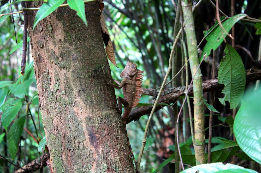 Zvířata se z lidmi navštěvované části parku stáhla hlouběji do džungle, takže je zahlédnout není úplně snadné.