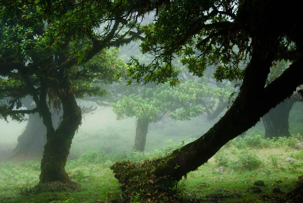 Tajemná mlha...skoro jak na blatech!