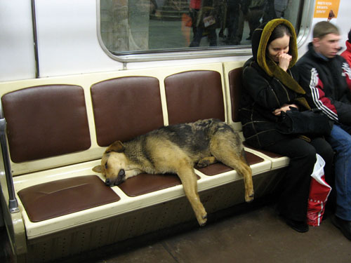 It's been a hard day's night, and I'd been working like a dog...