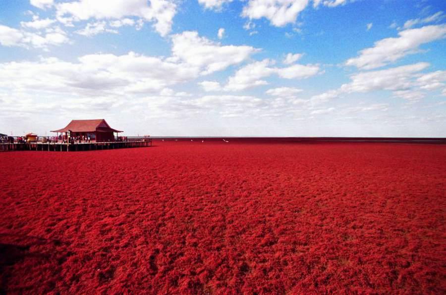 Červené pole, jaké se jen tak nevidí.