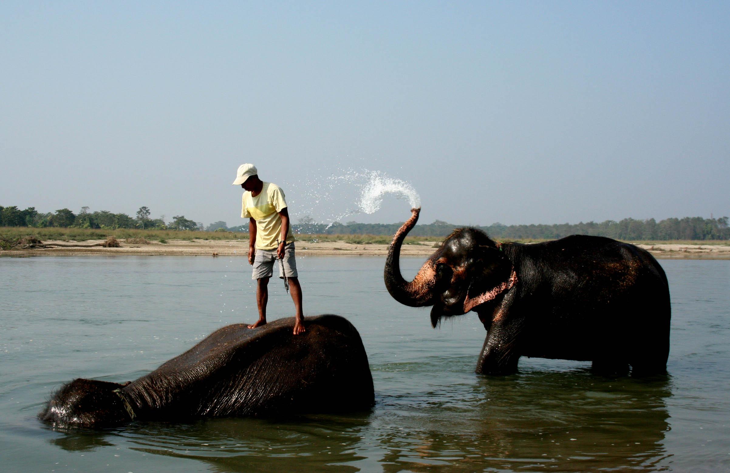 V Čitvanu umějí průvodci i chodit po vodě. Stačí jim k tomu slon.