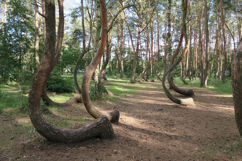 Vznik Křivého lesa se pochopitelně připisoval i mimozemšťanům.