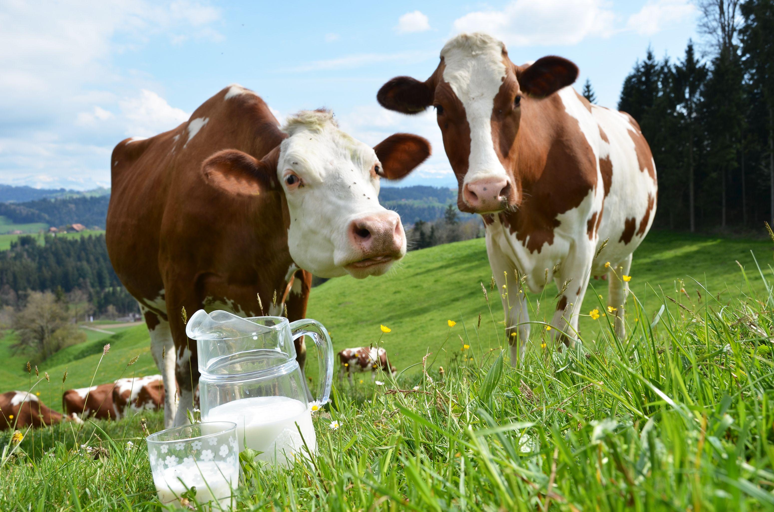 Rodištěm oblíbeného sýru je údolí Emmental, kterým protéká řeka Emme, východně od švýcarského Bernu.