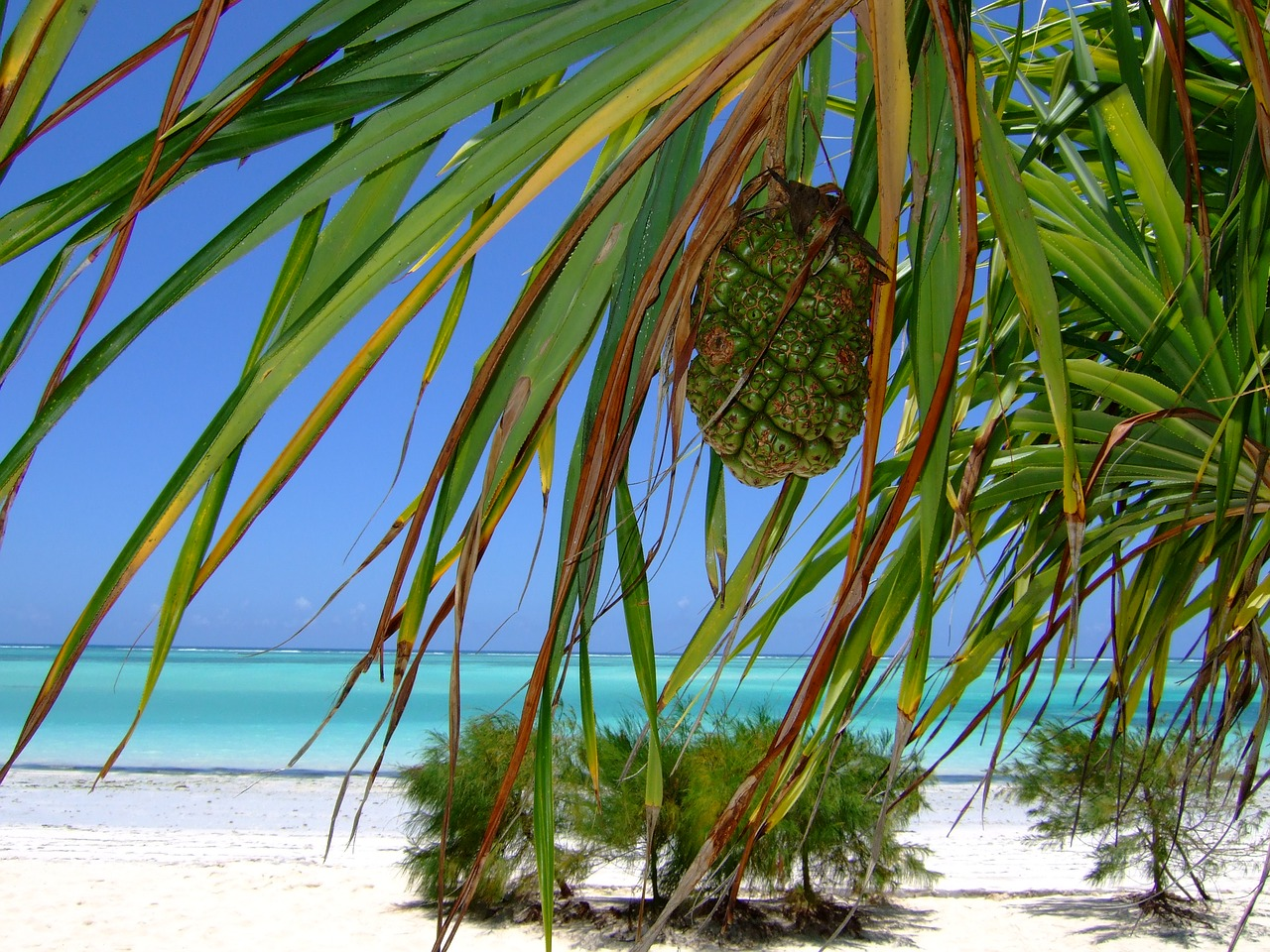 Jak roste takový kokos nebo kakaovník? Jak vypadá pravá vanilka nebo nesklizená skořice? To se dozvíte na Zanzibaru.